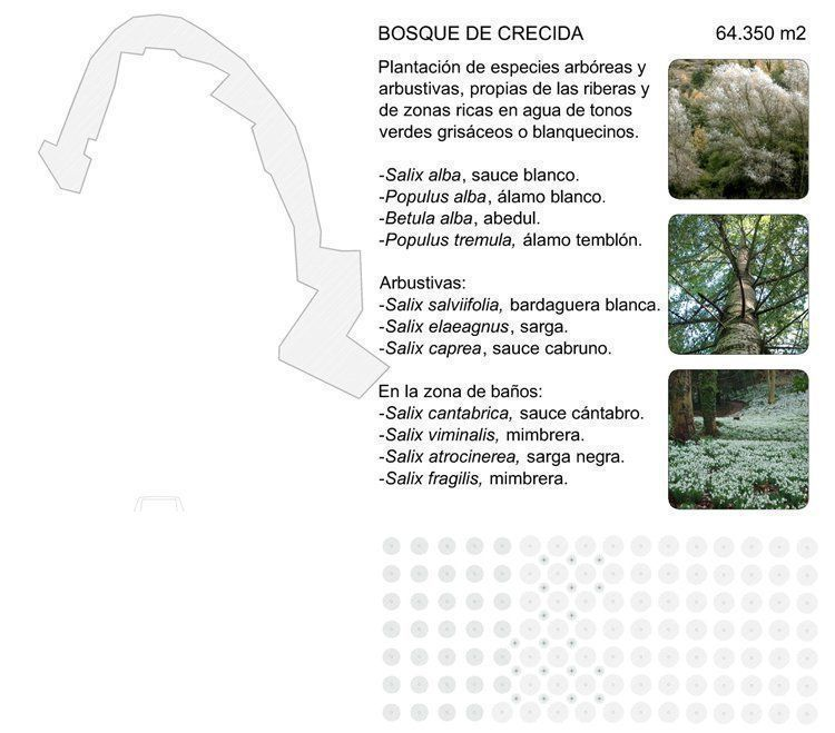 Bosque de crecida
