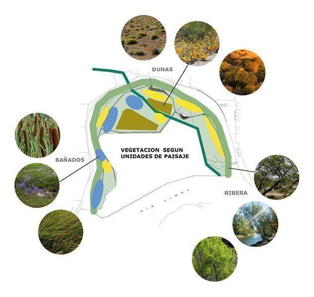 Vegetación según unidades de paisaje