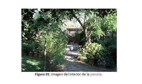 Figura 01: Imagen del interior de la parcela