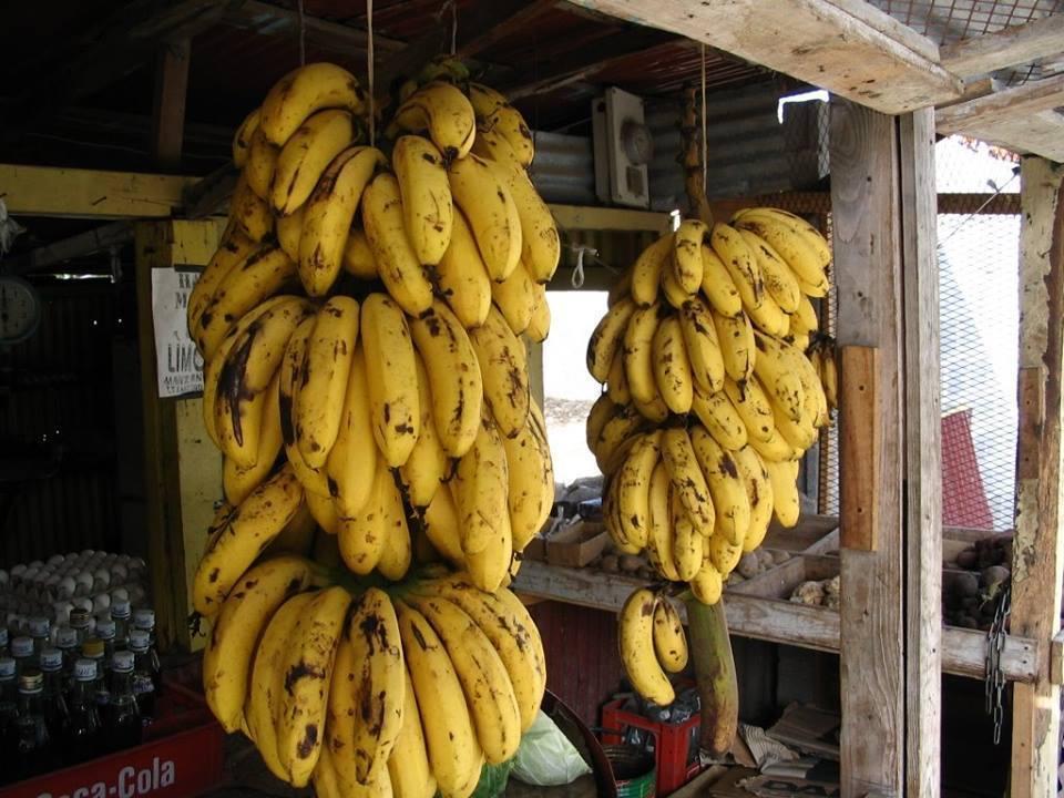 JUNTA - Repúblicas Bananeras Unidas