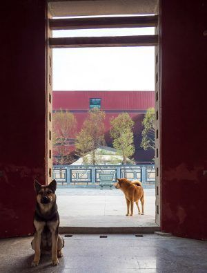 Photography:© Zhang Chao